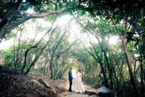 糸島(トトロの森)|フォトウェディング・前撮りに人気のロケーションスポット|福岡・九州でフォトウェディング・前撮りならウェディングセレクト!フォトウェディング